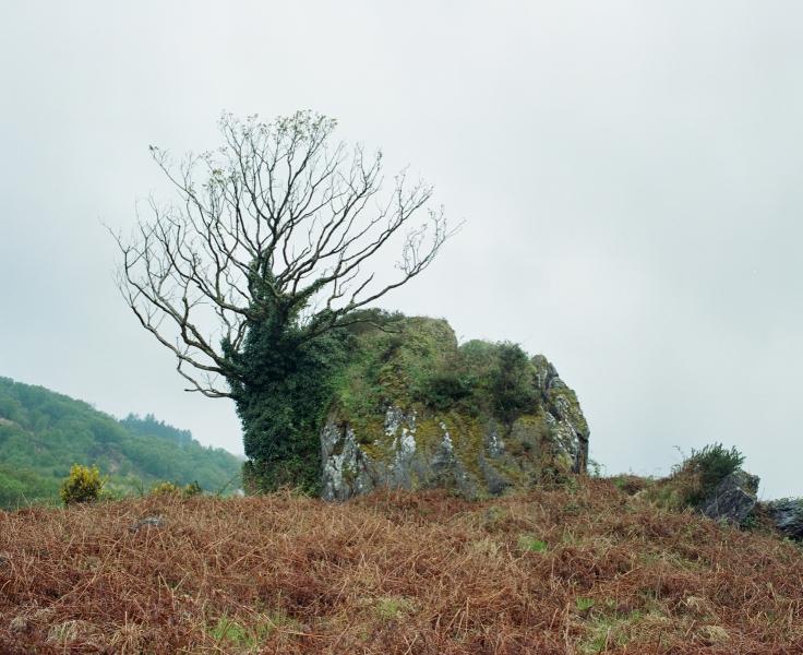 PEAT, ROCK, TREE, NEAR BALLEYVORNEY, IRELAND 2006
